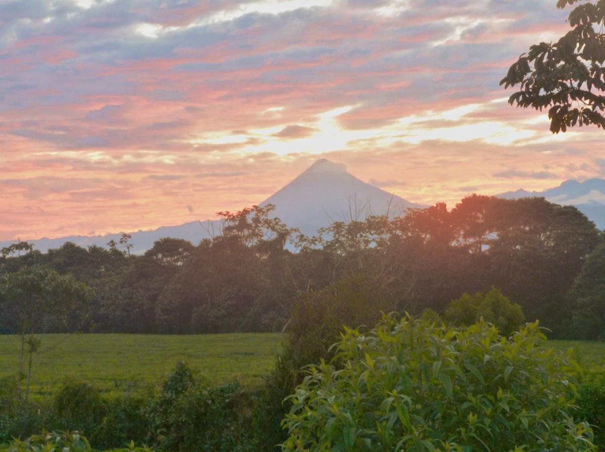 Se implementó con éxito en campos de Ecuador la cosechadora de té Lory MTH-500 fabricada en Oberá Misiones