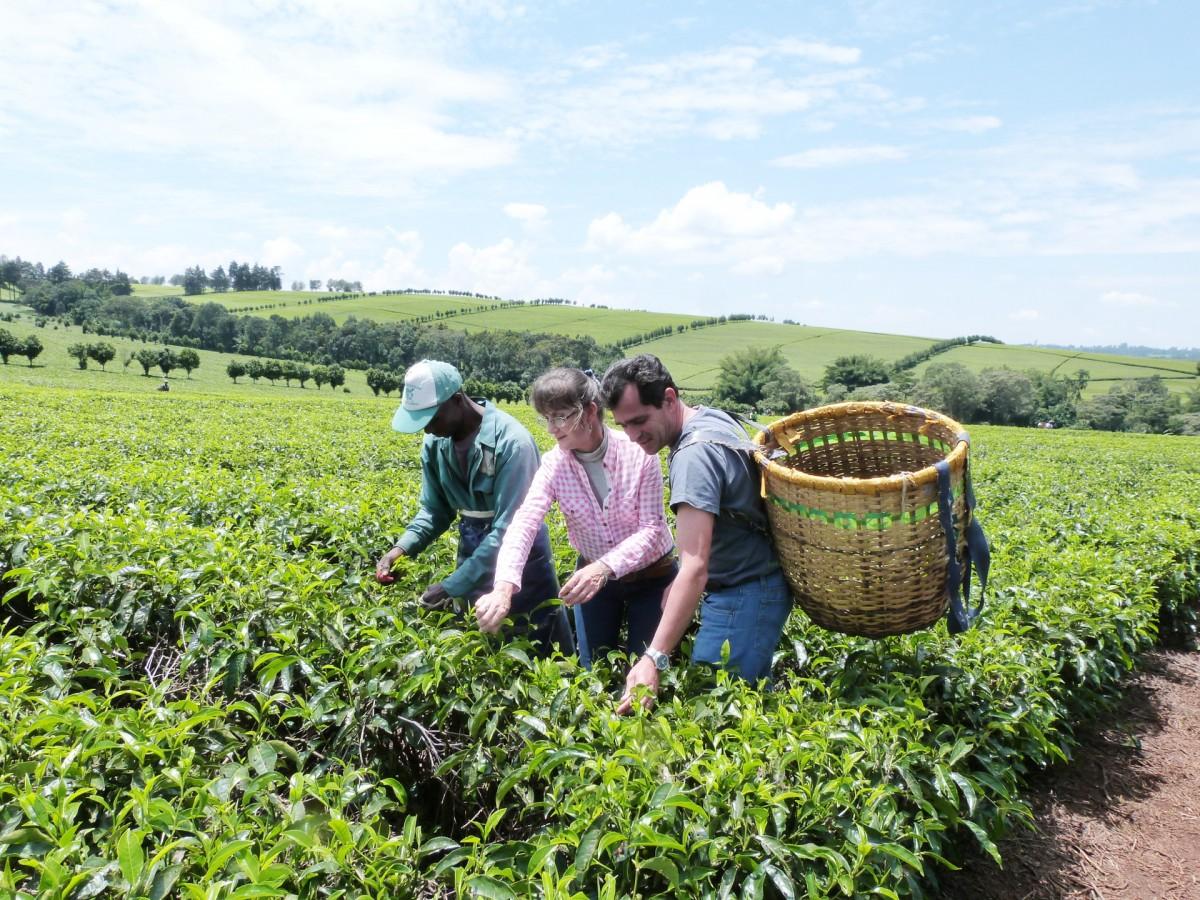 Visita de Lory Máquinas a Plantaciones de Té en Kenia
